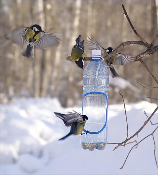 Фото кормушек для птиц своими руками из бутылки